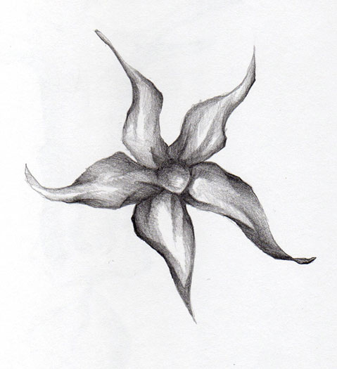 one simple pencil sketch